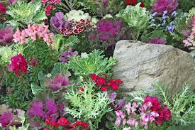 expand winter selections by planting cabbage kale mississippi