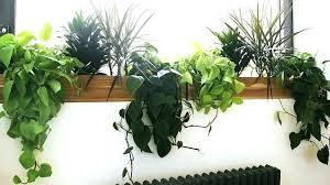 growing plants indoors with artificial light uv light for plants indoor fooru me