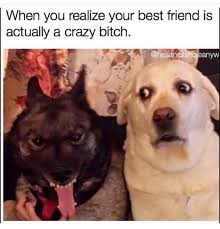 Dog Girlfriend Meme - pin by rubex cube on animals pinterest serious quotes and humor
