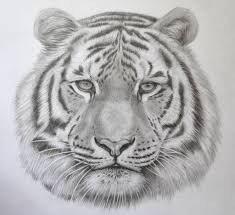 how to draw animals online drawing lessons