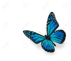Blue And Green Butterfly - blue green butterfly isolated on white stock photo picture and