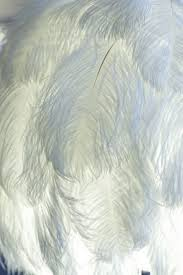 ostrich feather centerpiece tutorial hubpages