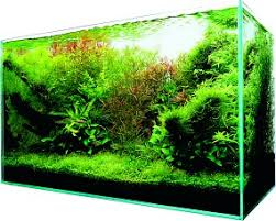 Aquascape Design Layout Let S Start With Q Choosing A Tank Aquascaping Wiki