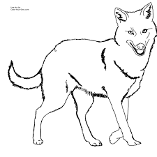 coyote jackal coloring pages for kids preschool and kindergarten