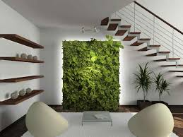 modern tall indoor plants potted plant tropical assorted species