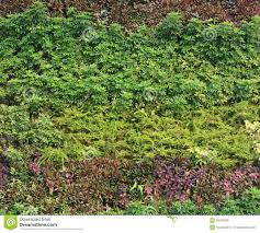 green wall vertical garden royalty free stock image image 38180296