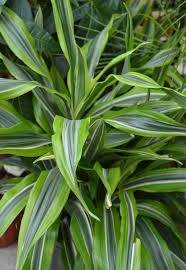 Best Low Light Indoor Plants by Live Healthy Clean The Air With House Plants A2y Chamber Ann