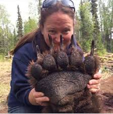 grizzly claws this is how big a s paw is neatorama