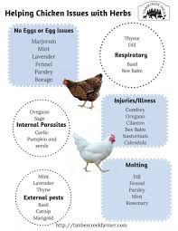 17 best images about chickens on pinterest sunflower seeds the