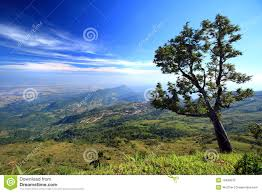 the tree on the mountain royalty free stock photo image 13400015