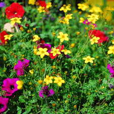 the gardens whiteface club u0026 resort