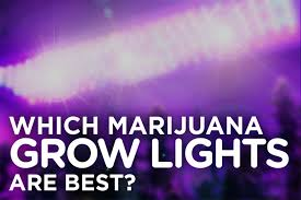 types of grow lights the different types of grow lights for a stellar cannabis crop the