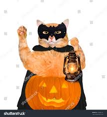 halloween background small cat wearing costume halloween pumpkin isolated stock photo