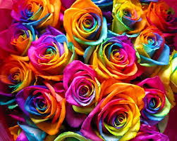 multicolored roses what are rainbow roses and how to make them