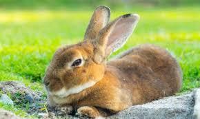 rabbit bunny don t let the rabbit spark bunny fever peta