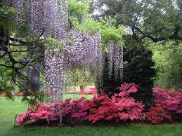 Season Botanic Gardens Late Highlights Botanic Garden
