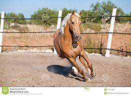 Beautiful Blond Cruzado Horse Outside Horse Ranch Field Stock
