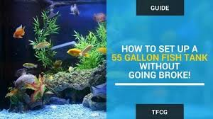 55 gallon aquarium light 55 gallon fish tank setup how to set up a 55 gallon aquarium
