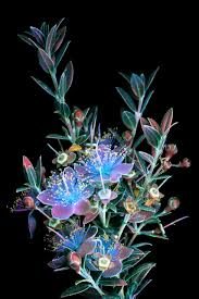 photos of flowers dazzling images of glowing flowers photographed with ultraviolet