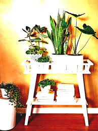 decor plants home decor plants name home decoration decorative india indoor blooming
