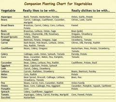 herb growing chart sle companion planting chart which garden plants grow well