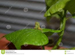 The Inchworm Inch Worm Stock Photo Image 4835720