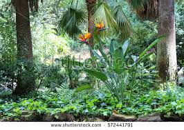 tropical garden stock images royalty free images u0026 vectors