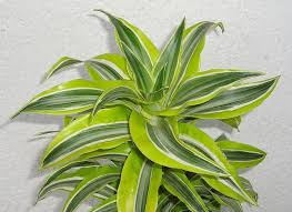 Air Purifying Plants 9 Air by 9 Houseplants That Will Purify Your Home U0027s Air Avas Flowers