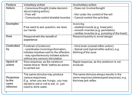 Describe A Reflex Action Voluntary Involuntary Actions Biology Notes For Igcse 2014