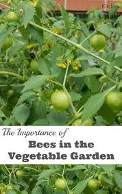 the importance of bees in the vegetable garden pin jpg