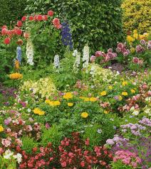 flower garden ideas plants photograph over a garden full