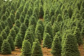 farm facts about trees