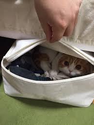 Rich Cat Meme - ccyvlhsusaadhkz jpg 600 800 ピクセル pets pinterest hibians