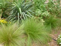 exterior design mexican feather grass for inspiring garden plants