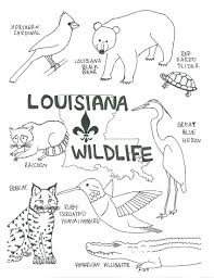 animal coloring sheets printables free realistic wildlife pages