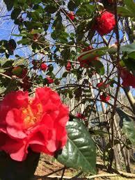 Clemson Botanical Garden by South Carolina Botanical Gardens Clemson Sc Picture Of South