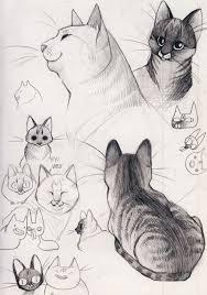 120 best animal reference images on pinterest animal anatomy
