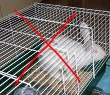 gabbie per conigli nani usate sistemazione