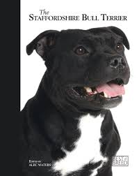 the staffordshire bull terrier best of breed alec waters