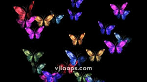 the butterfly effect vjloops animation particles