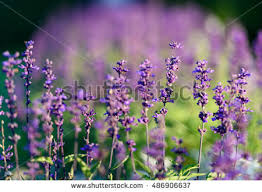 natural flower background amazing nature view stock photo