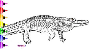 killer croc coloring pages alligator coloring page for kid learn to draw and titanoboa