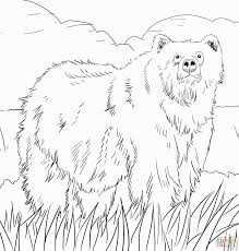 Woodland Animals Coloring Pages Free Printable Pictures Alaska Woodland Animals Coloring Pages