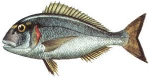 poisson à cuisiner recettes2poisson com les recettes de cuisine de poisson de la