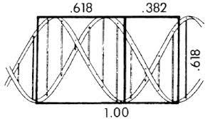 golden ratio dna spiral golden ratio in the human body body chin dna en fibonacci