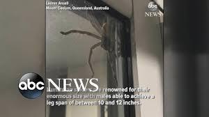 Huge Spider Memes Image Memes - hauntingly huge spider spotted in australia youtube