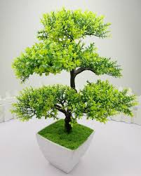 home decoration plants latest indoor plants decoration ideas with