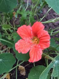 garden flowers and plants inhancing men u0027s health u2014 steemit