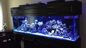 Reef Aquarium Lighting Led T5 Hybrid Aquarium Lighting Cycle Youtube