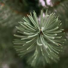 tronc d arbre artificiel arbre de noël de hylton artificiel 150 cm abres artificielles et